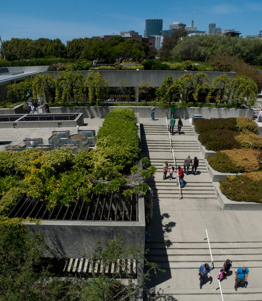 Overhead view of the OMCA sculpture gardens and terraces