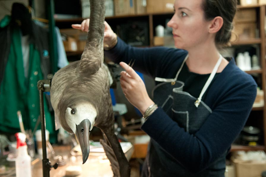 View a demonstration dissection of an albatros bolus at the Oakland Museum of California's Friday Nights @ OMCA on April 22. Photo: Terry Lorant