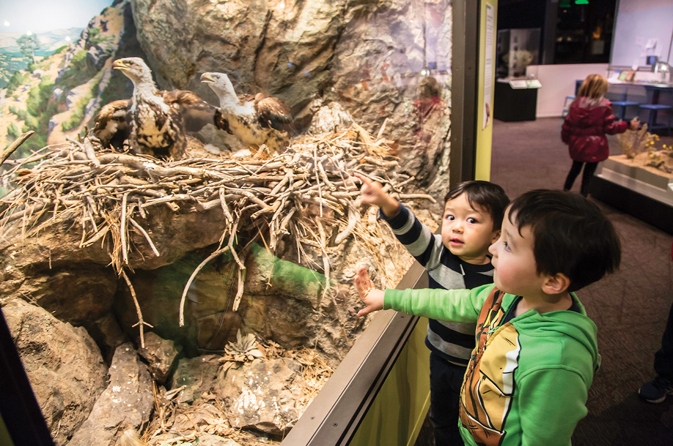 Two small children look at a diorama of birds inside OMCA's Gallery of California Natural Sciences