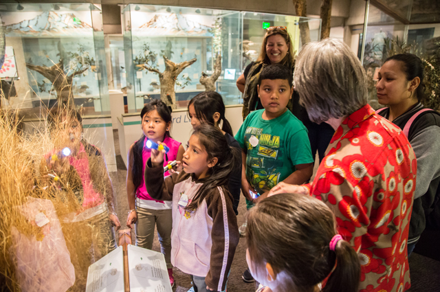 Students gather around a display case with a Docent and teacher behind them