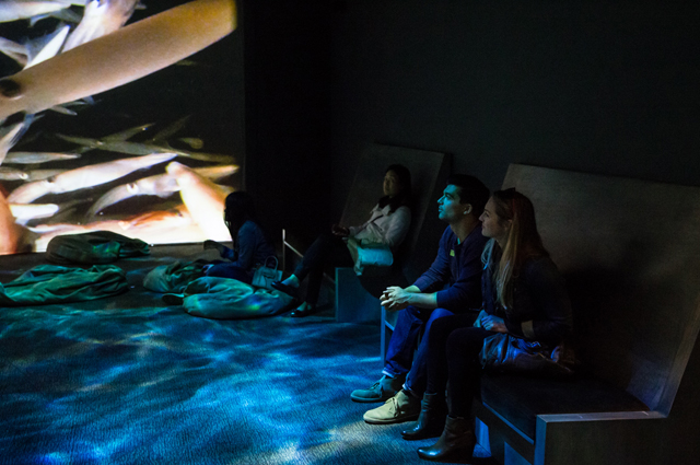 A group of people sit in a large room with a screen showing underwater images