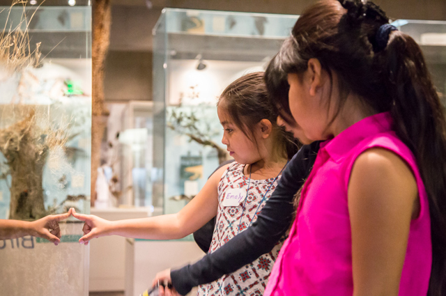 Children looking at a museum exhibit behind glass