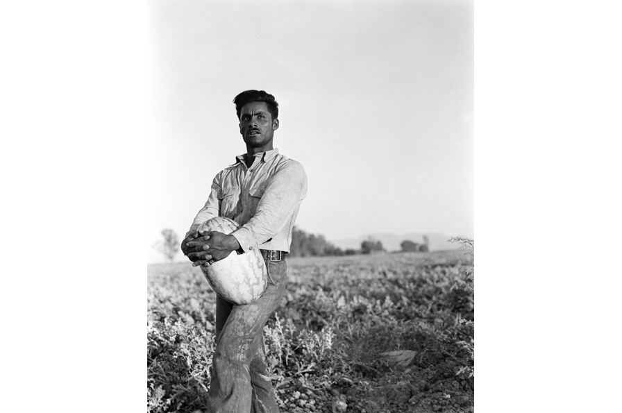 Dorothea Lange, Melon Fields, circa 1935. Copyright OMCA; Gift of Paul S. Taylor