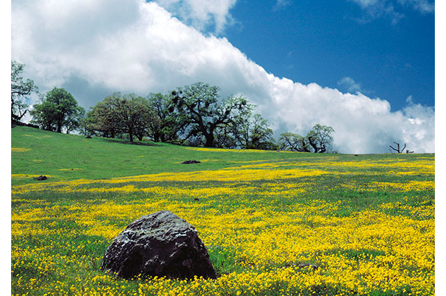Grasslands and woodlands in the Bay Area