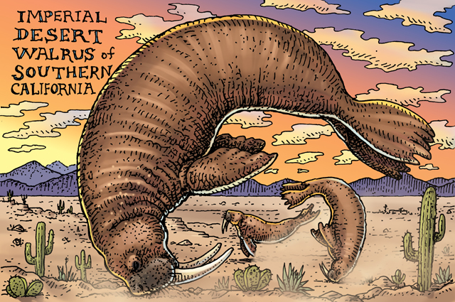 "Drawn image of three walruses tumbling around a desert at sunset with the caption ""Imperial Desert Walrus of Southern California"""