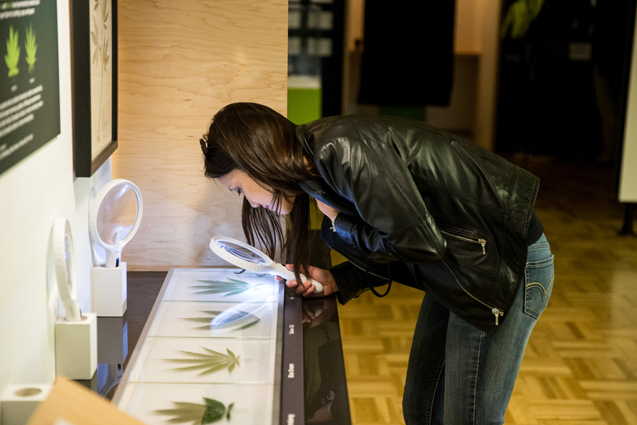 Examine plants up-close and smell different strains of weed. Photo: Odell Hussey Photography