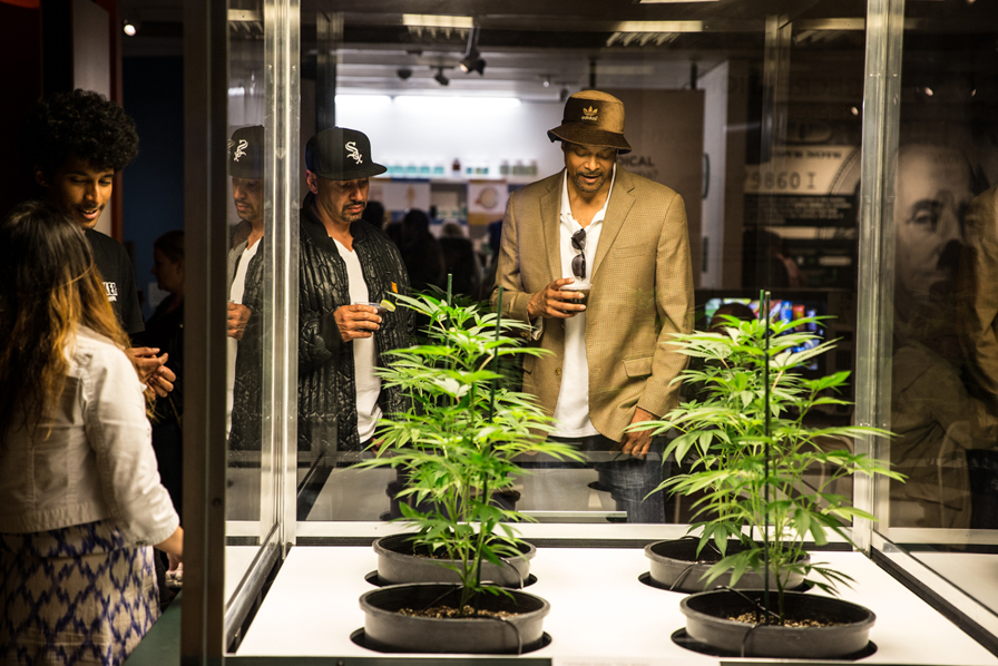 "Visitors examine live cannabis plants inside the ""Alien"" case. Photo: Odell Hussey Photography"