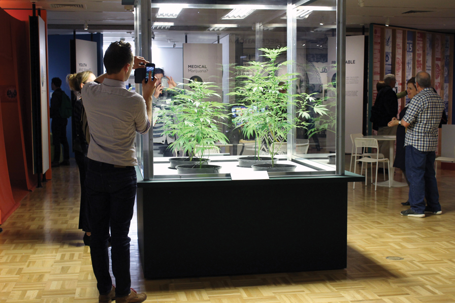 10. The centerpiece of the exhibition, a case filled with marijuana plants, provides a photo opportunity.