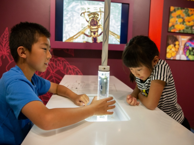 Two children use a large microscope to view bugs