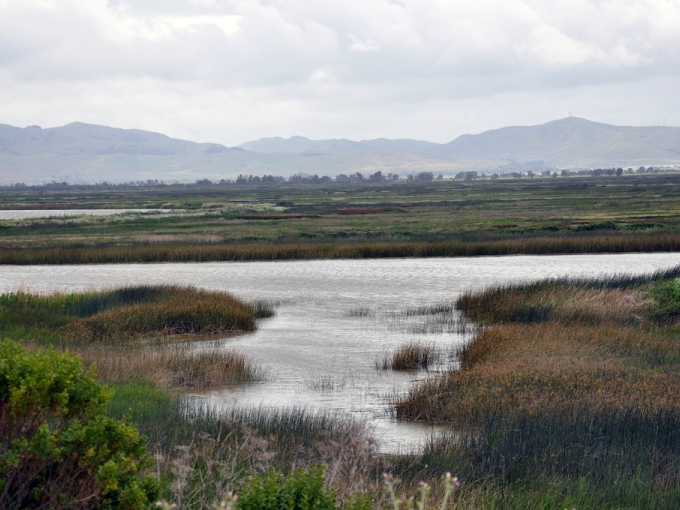 Suisun Marsh overlook. Photo: USFWS photo/Steve Martarano.