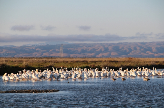 Wetlands like these are being lost quickly in the San Francisco Bay Area. Praveen Desai/Flickr Creative Commons Attribution 2.0 Generic