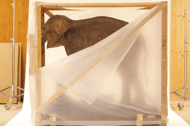 A baby elephant at the OMCA science galleries