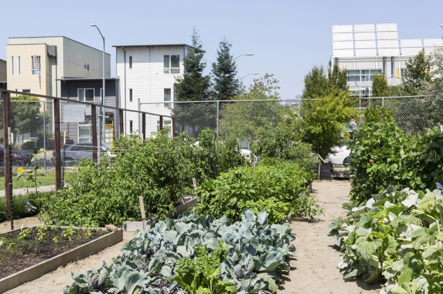 A view of the Acta Non Verba farm, located in Tassafaronga Recreation Center in East Oakland.