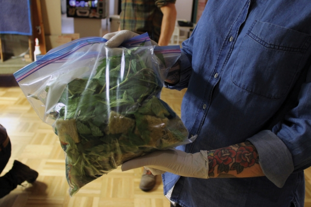 Cannabis clippings to be put into the tactile box for visitors to touch using laboratory-strength glvoes