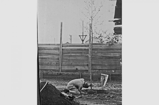 Bruce Beasley planting a tree in 1964 in the future sculpture garden behind the second studio built at 320 Lewis Street. Courtesy of Bruce Beasley.
