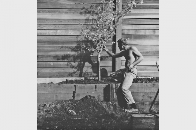 Bruce Beasley planting a cherry tree in 1964 in what would be the future sculpture garden at his studio complex.  Courtesy of Bruce Beasley.