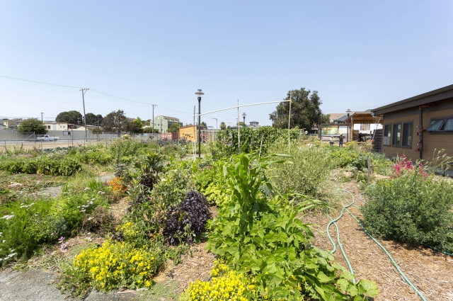 City Slicker Farms in West Oakland provides healthy food to community members through its urban farms and backyard gardens.