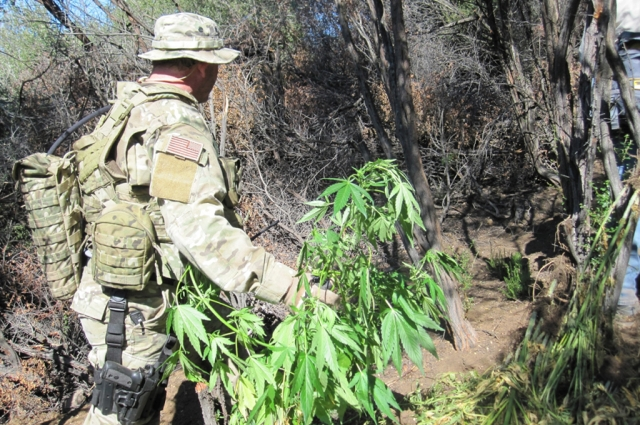 A park ranger cleans up a marijuana grow site in the Santa Monica Mountains. Credit: National Park Service