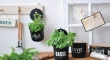 Hanging herb pots in a kitchen